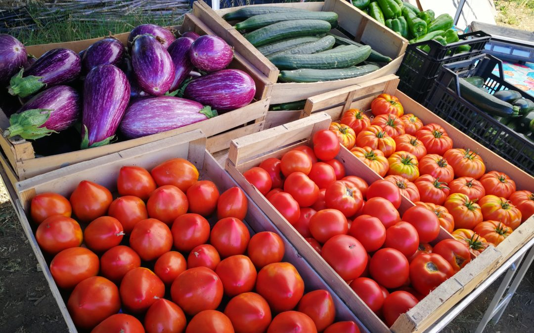 Lancement de l'AMAP L'accro aux légumes St-Martin-de-Crau